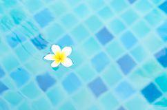 White flower on aqua blue water Stock Photos