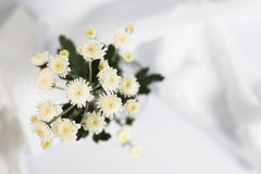 White flower. Stock Image