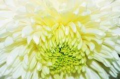 White flower background, close up Stock Photos