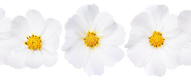 White flower background Stock Photography