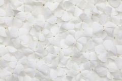 White flower background. Or organic natural texture Stock Image