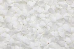 White flower background Stock Image