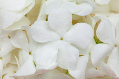 White flower background Royalty Free Stock Photos
