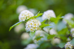 White flower balls. A white flower ball on a trail in utah royalty free stock photography