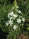 White Flower in Battery Park. Stock Photography