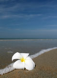 White flower and beach Stock Photography