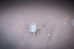 White flower beach Stock Image
