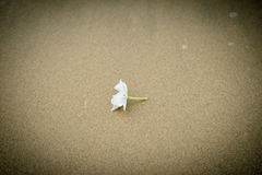 White flower beach Stock Images