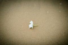 White flower beach Stock Images