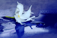White flower. Is a beautiful flower stock photography
