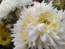 White Flower. Beautiful White Flower. Best way to send the regards royalty free stock photos