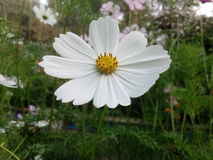 White flower. Beautiful fresh flower royalty free stock photos