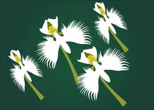 White flower. White beautiful flower with green background vector illustration