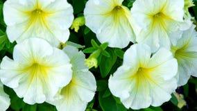 White flower Stock Image