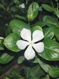 White flower. Beautiful flower. stock photography
