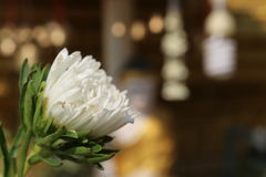 White Flower. Beautiful White Flower in Temple Stock Photos