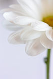 White flower. Stock Photo