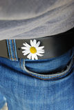 White flower in belt hole holding blue jeans. White flower in belt hole of a black belt holding a blue jeans below a grey t-shirt Stock Images