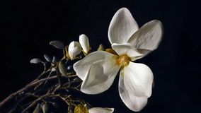 White flower on the black background Stock Photo