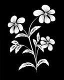 White flower on black background. White branch  flower on black background Stock Photos