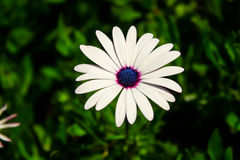 White flower. Flower blossom natural beautiful garden Royalty Free Stock Photography