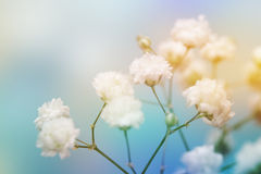 White flower on blue background. Royalty Free Stock Photography