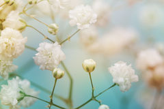 White flower on blue background. royalty free stock photos