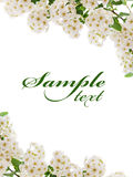 White flower border Royalty Free Stock Photos