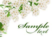 White flower border Stock Photos