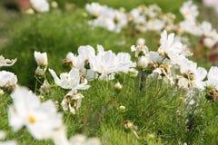 White flower 01. White flower on the Bothanic Garden. Captured at 7.7.2018 stock image