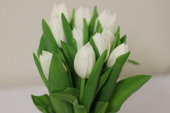 White Flower Bouquet Royalty Free Stock Photo