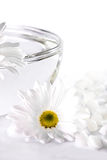 White flower and a bowl with water. On white background Royalty Free Stock Photo