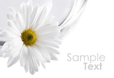 White flower on bowl with water Royalty Free Stock Photos