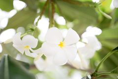 White flower branch. Close up Stock Photos