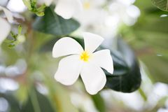 White flower. Branch close up Royalty Free Stock Images