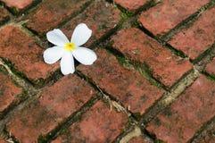 White flower on the brick floor. Daytime Stock Photo