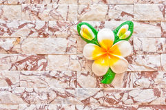White flower on a brick wall Stock Images