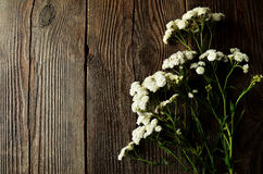 White flower on brown wooden background Stock Image