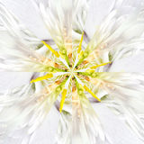 White Flower Center Collage Geometric Pattern Royalty Free Stock Images