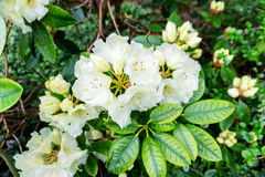 White flower center focus blur background trees in the background blurred Royalty Free Stock Photos