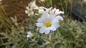 White Flower Beside Chop Wood Stock Images