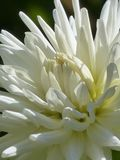 White Flower on Close Up Shot Royalty Free Stock Photos