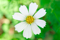 White Flower. Close up view stock image