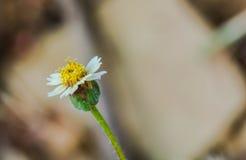 White flower closeup Royalty Free Stock Photos