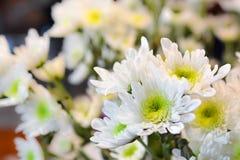 White flower closeup. White flower with yellow pollen closeup stock photo