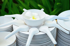 White flower in the cup. Plates,spoon and cups with white flower Royalty Free Stock Photo