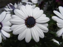 White Flower in Deep Garden stock photo