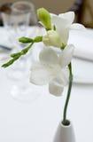 White flower - dinner table decoration. White flower - restaurant table decoration Stock Photo
