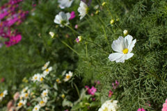 White flower in field Stock Photography