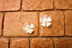 White flower in the floor. The orange Royalty Free Stock Photos